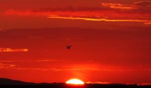 opkomende zon rood